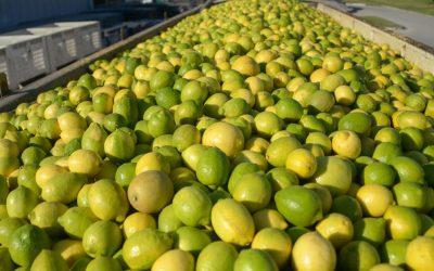 Argentina logra la reapertura del mercado de la Unión Europea para la exportación de cítricos.