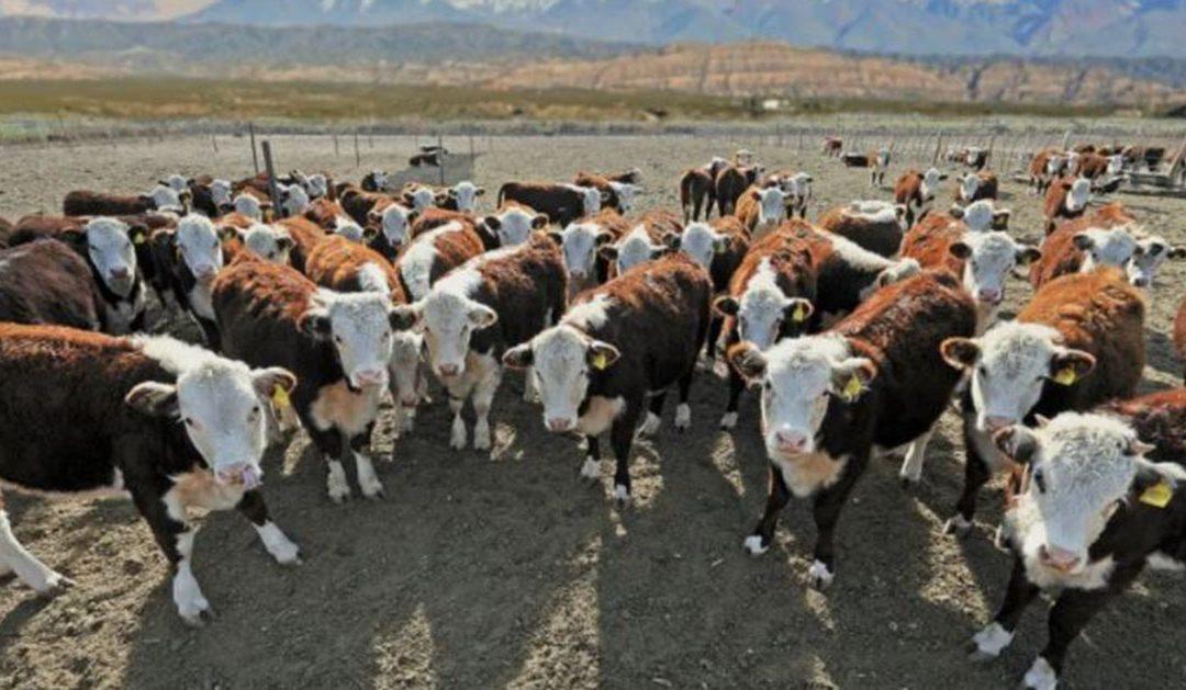 Gobierno argentino analiza subir a 15% los derechos de exportación de carne vacuna
